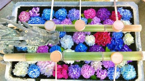 梅雨の時期を彩る優美な花〜京都府内の紫陽花(アジサイ)名所6選