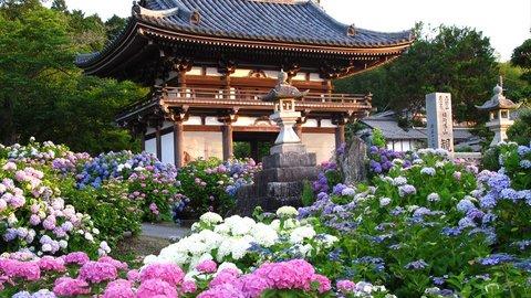 「あじさい寺」丹州観音寺へ古寺探訪。福知山で話題の展望台へ