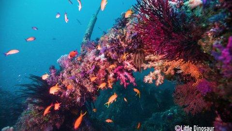 海の宝石たちと海中散歩。鮮やかな三重県尾鷲の「人工魚礁」へ