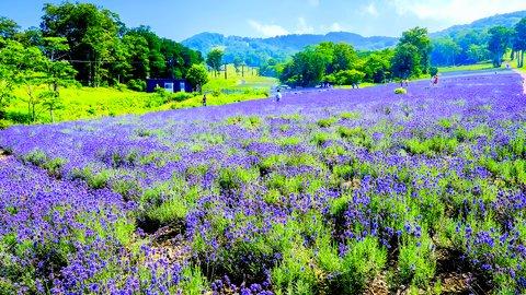 いまは穴場?令和に注目が集まりそうな日本国内の「絶景」スポット