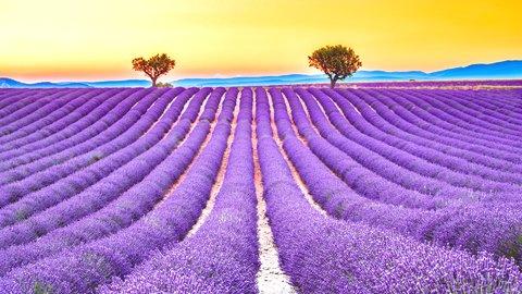 色あざやかな癒しの花畑。世界にあるファンタジーな「花の絶景」6選
