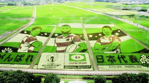 ナスカの地上絵超え?世界最大の「田んぼアート」は埼玉にあった