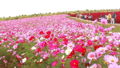 憂いを感じる咲き姿。都内近郊で楽しむ「秋のお花畑」10選