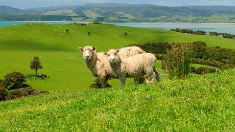山派も海派もヒツジ派も。ニュージーランドを堪能できるアクティビティ4選