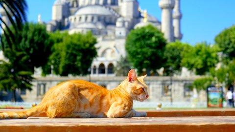 にゃんとも癒されるにゃー。絶景も楽しめる「世界の猫の街」6選
