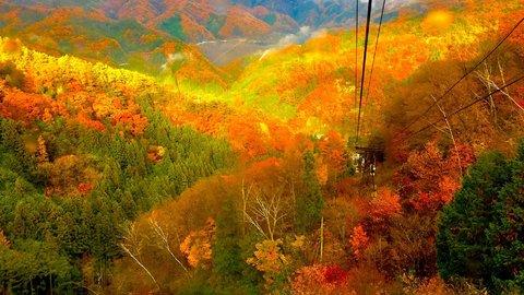 哀愁の色づき。美しい紅葉を楽しめる関東近郊の「ロープウェイ」9選