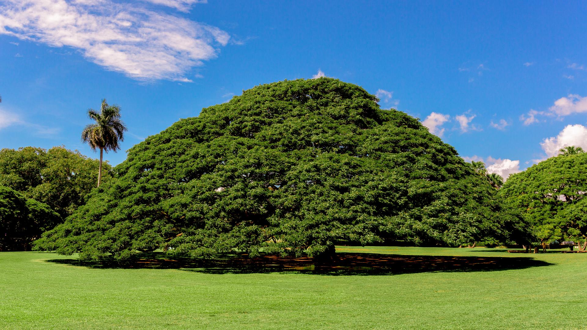 木だけに気になる?物語感じる、不思議な「世界にひとつだけの木」8選 ...