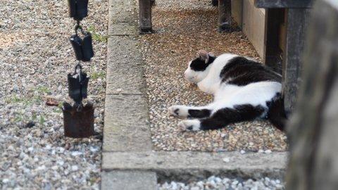 かわいいが最強。ネコ愛あふれるパワースポット、福井「御誕生寺」