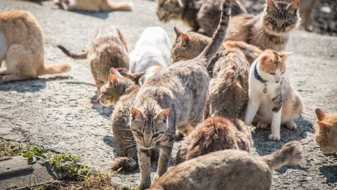 一緒にのびのび、モフモフ。国内の「野生動物に会える島」TOP10