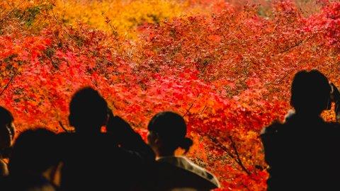 2019年はどこが混む?外国人旅行者から見る、全国の「紅葉」混雑予想
