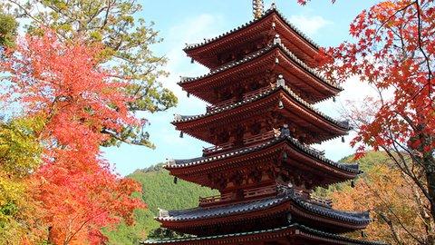 海住山寺で文化財特別公開!紅葉狩りをしながら古寺探訪【2019秋】