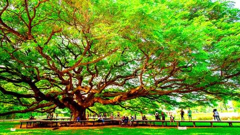 人生を楽しもう。美しい景色に癒される「タイ」日帰り旅行先3選