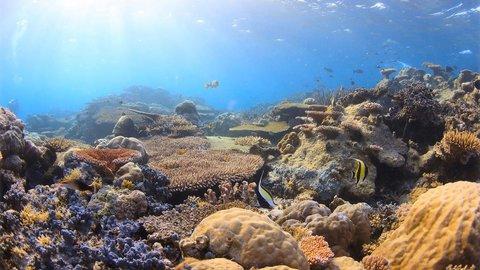 幻想的な海の世界を写真に残す。水中写真家が出会った青い景色