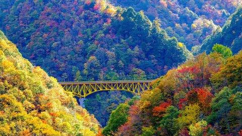 これから見ごろ。1日で楽しむ、埼玉・秩父の「穴場紅葉」スポットめぐり