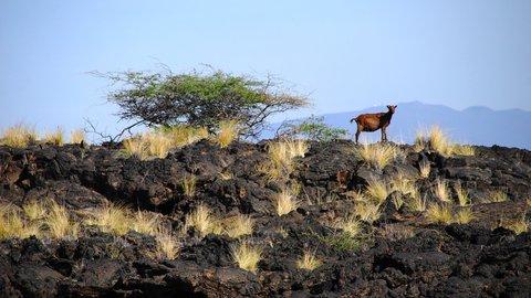 ハワイで一番ディープ&ピース。溶岩と生きる楽園プナの不思議な魅力