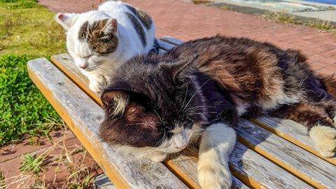 ここが天国だったのか。猫まみれな宮城県「田代島」で絶景旅ラン