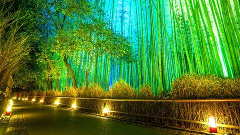 灯が映し出す夜の顔。京都・嵐山花灯路の「和イルミネーション」