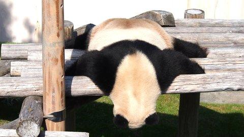 アニマル好きを魅了した、全国の人気「動物園」ランキング2019