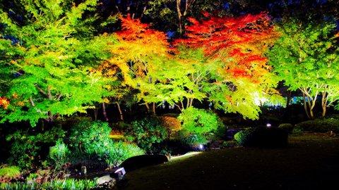 まるでタイムトリップ。情緒あふれる「江戸東京たてもの園」紅葉ライトアップ