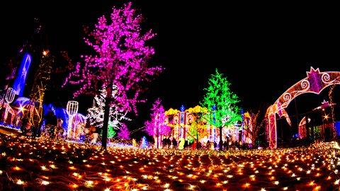 冬は夜こそ美しい。全国の幻想的な「イルミネーション」TOP10