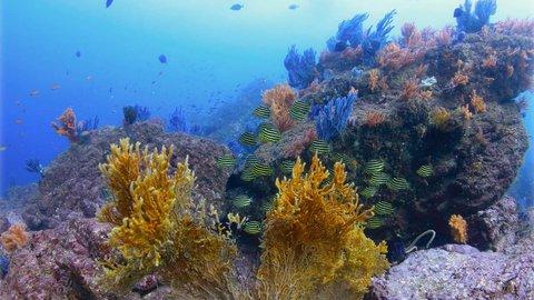 広大な海の魅力を再発見。水中写真家がシャッターを切った瞬間