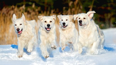 お出迎えするワン。全国の宿が自慢する「看板犬」ランキングTOP5