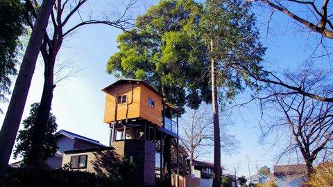 日本一デカいかもしれない「ツリーハウス」カフェは埼玉・所沢にあった