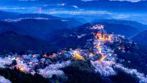 心にしみる山桜。夜のライトアップも楽しめる奈良県「吉野山」