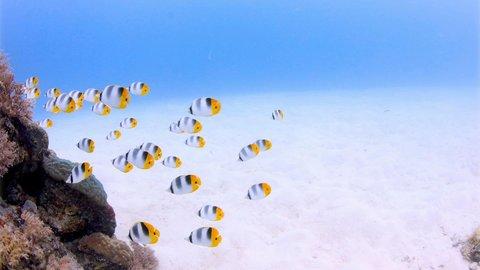 海中でも恋の季節が到来?水中写真家がとらえた恋に奮闘する魚たち