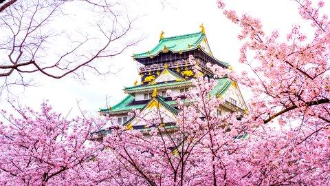 一度みたら、忘れられない美しさ。桜の絶景、大阪府「大阪城公園」