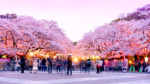 文化の街を彩る桜。美しき写真でめぐる、東京都「上野恩賜公園」