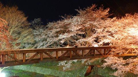 京都府 注目の夜桜「ライトアップスポット」