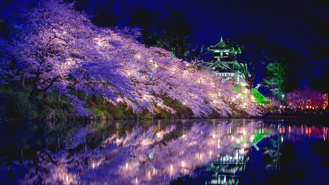 春の夜を美しく彩る。日本三大夜桜のひとつ、新潟県「高田公園」