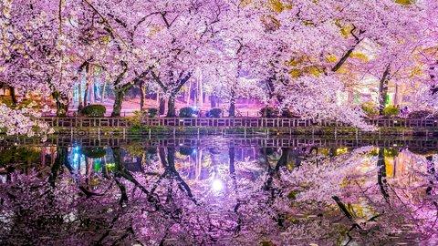 春の夜に花舞う絶景。写真でめぐる東京都内の「夜桜」名所9選