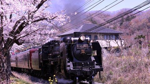心おどる春の喜び。美しき関東近郊の絶景「桜スポット」15選