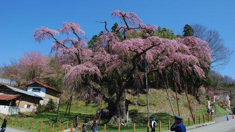 咲きゆくぜ、福島。最新「インドア花見」で郡山市の春を満喫