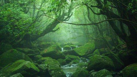 過去から未来へ繋ぐ。いつか行きたい、日本にある24の「世界遺産」