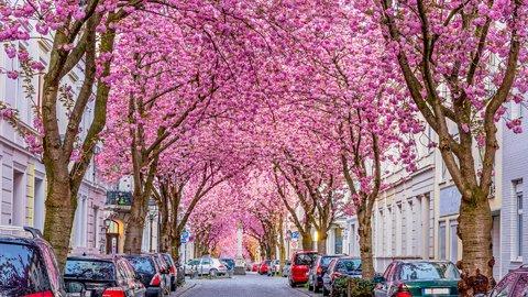 お家で旅気分。世界各国のジャーナリストが選ぶ「春の絶景」10選
