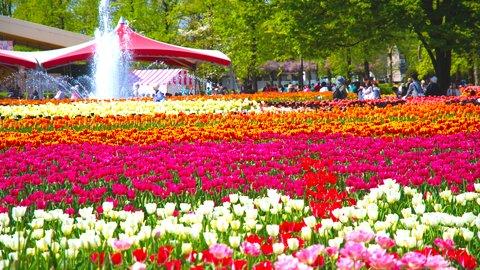 心を癒す四季折々の絶景。全国で彩りを魅せるカラフルな「花の名所」20選