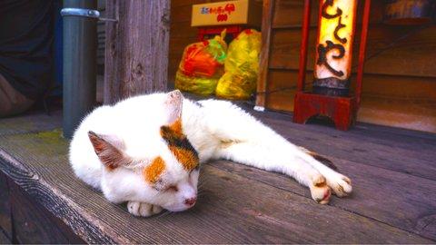 たまらにゃい…日本全国「宿の看板猫」ランキング【2020】