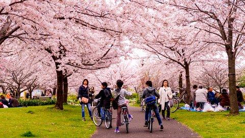 東京都が4/1より「自転車保険加入」義務化、親世代はどう考える?