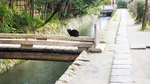 癒しを求めることは、猫を求めることである。京都「哲学の道」で猫さんぽ