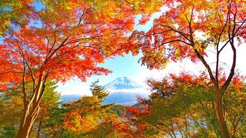 富士山を彩る絶景のアート作品。山梨県「もみじトンネル」で秋を満喫