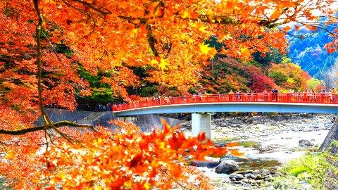 絶景のライトアップも。愛知県豊田市「香嵐渓もみじまつり」の秋景色