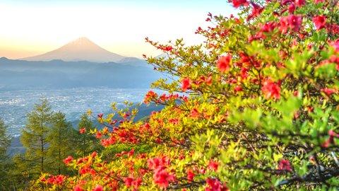 お花に癒されながら…15分で簡単に登れる山梨県「甘利山」ハイキング