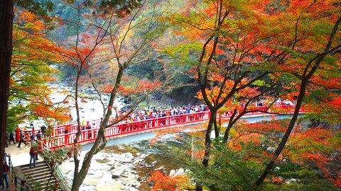 愛知屈指の紅葉名所。江戸時代から続く絶景スポット「香嵐渓」へ