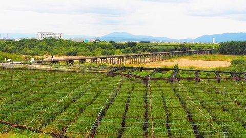 秋風を感じながら走ろう!日本遺産を巡る「お茶の京都サイクリング」