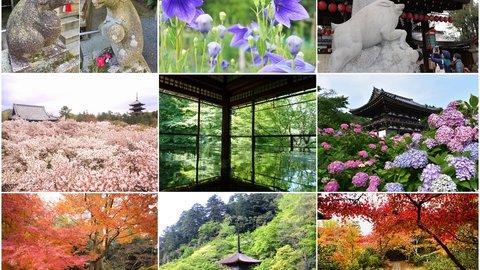 花&植物と一緒に楽しめる!京都の神社仏閣23選