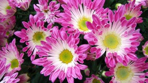 新潟県民は美しい「花」を食べる?年末年始に食べたい、おもしろ県民フード