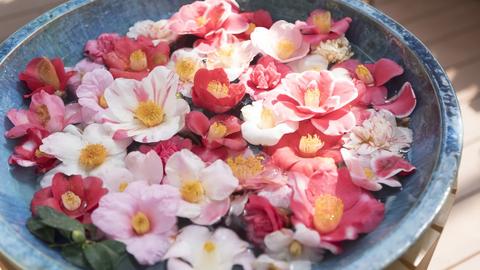 美しい椿に、貴重な奇祭も。石川県「加賀の國」を感じる冬イベント4選
